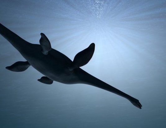 Giant Marine Plesiosaur Discovered, says new research