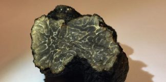 Truffle found in Paris rooftop garden (Photo)