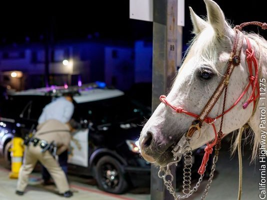 California: Man Busted For DUI After Riding Horse