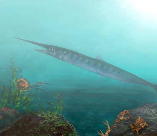 Colombia: Tourist aids Edmonton paleontologists in discovery of new ancient fish fossil
