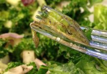 Lizard in lettuce? Woman traumatised by what she found in her salad