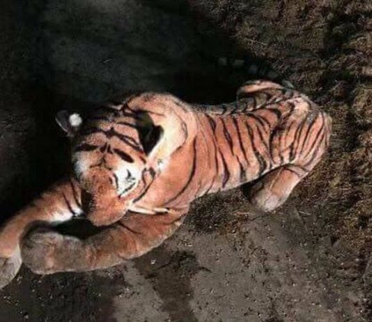 Toy tiger sparks armed police stand-off on Scottish farm