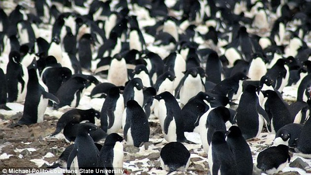 Scientists discover penguin 'super-colony' in Antarctic