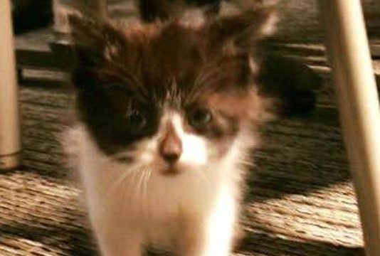 Adorable Kitten Joins Michigan Police