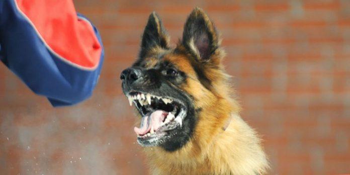 Health Canada looking into 4-year-old boy's treatment of rabid dog saliva