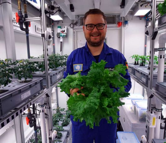 Researchers harvest the first veggies from fancy Antarctic greenhouse