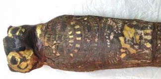 'Hawk Mummy' Turns Out To Be A Baby With Severely Malformed Skull