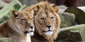 Animals Break Out Of Zoo in west Germany