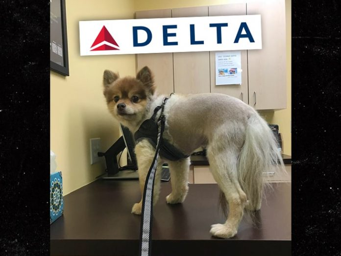 Dog Found Dead On Delta Airlines Flight, family wants answers