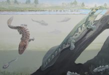 New discovery: A tetrapod fauna from within the Devonian Antarctic Circle