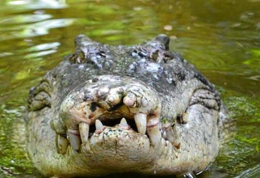 Pastor killed by croc during lake baptism