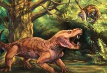 Research: Monstrous Saber-tooth Species Discovered in Russia