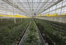 Aphria wrestles with hostile takeover bid by Ohio-based company, Report