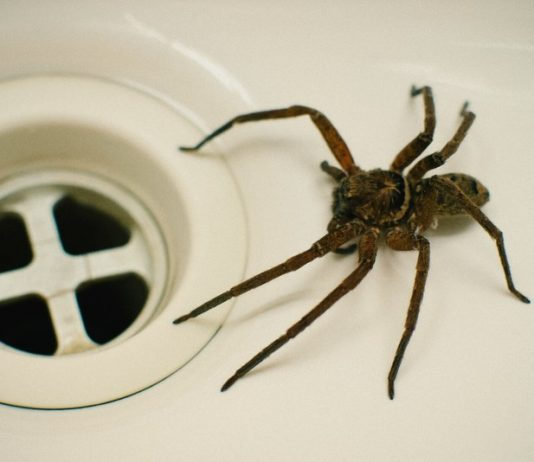 Police Called On Man Issuing Death Threats To A Spider (Reports)