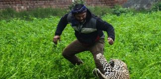 Leopard goes on rampage in India, mauls six people in terrifying attack