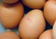 NSW investigates Salmonella outbreak linked to Australian eggs