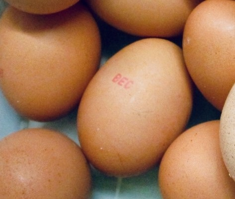 NSW investigates Salmonella outbreak linked to Australian eggs