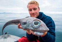 "Fisherman catches rare ""dinosaur-like"" ratfish"
