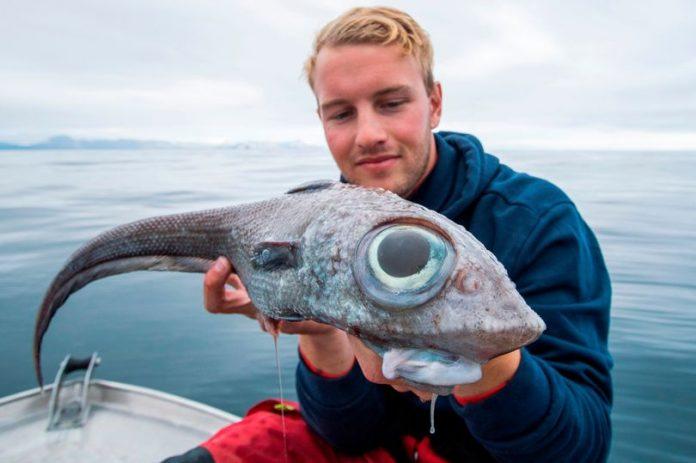 "Fisherman catches rare ""dinosaur-like"" ratfish"