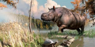 New research: Rhinos and turtles once roamed Yukon lands
