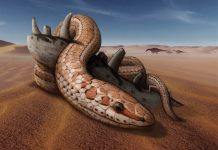 Study: Fossils shed light on snake bite and legs