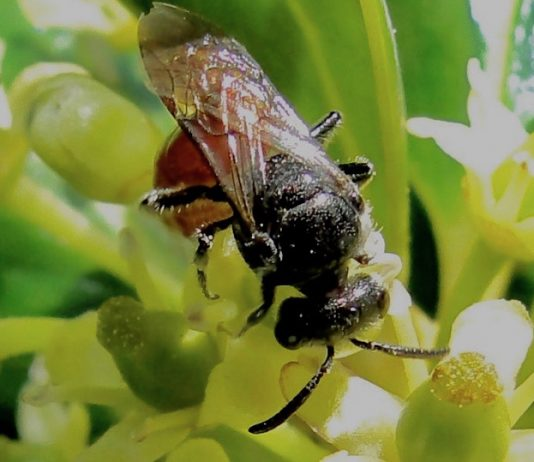 Prescribed Burns Benefit Bees, Report