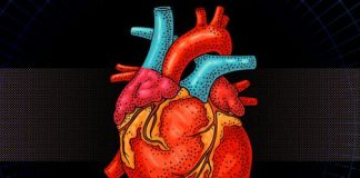 """Researchers design bionic """"heart"""" for testing prosthetic valves"""