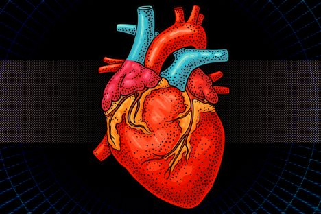 "Researchers design bionic ""heart"" for testing prosthetic valves"