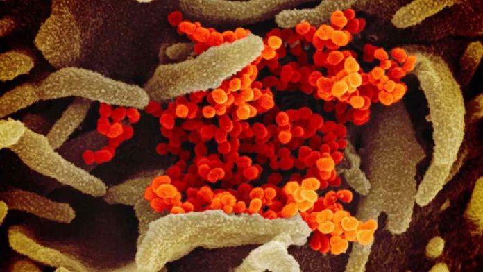Coronavirus Canada update: Alberta reaches 50 deaths related to COVID-19