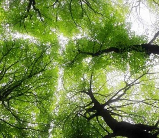 Forests worldwide are getting younger, Says New Study