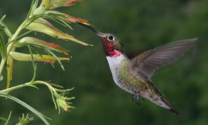 Hummingbirds see colours humans can only imagine, Says New Study