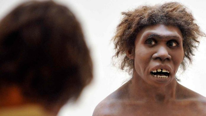 Researchers have created mini brains containing Neanderthal DNA