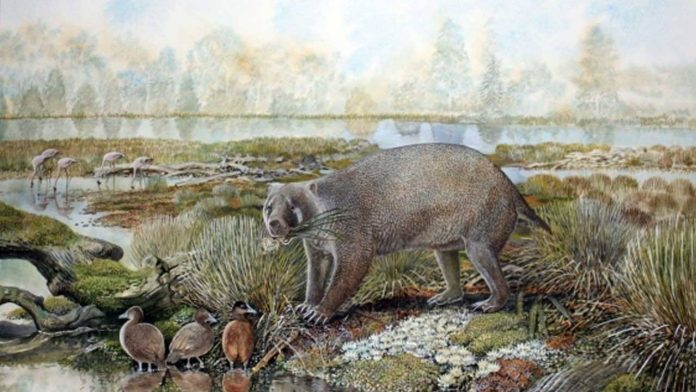 Scientists discovered an extinct family of giant wombat in the Australian desert