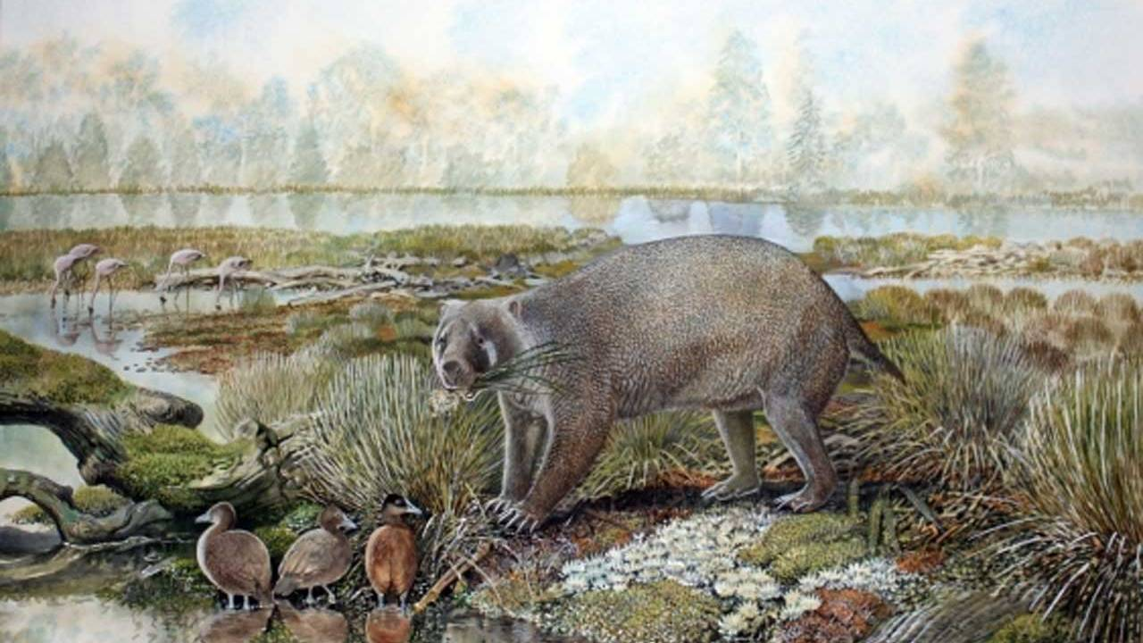 Scientists discovered an extinct family of giant wombat in the Australian desert - lintelligencer