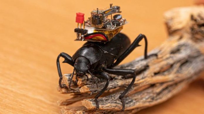 Beetle-mounted camera streams insect adventures, Researchers Say