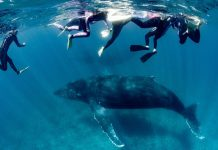 Woman Seriously Injured by Humpback Whale in Australia tourist spot