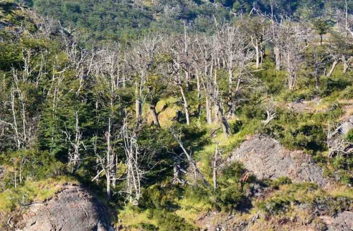 CO2 makes trees live fast and die young, says new research