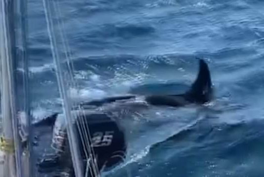 Killer whales attack boats off Spain and Portugal (Watch)