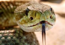 Rattlesnakes bit two hikers at Yosemite National Park, Report