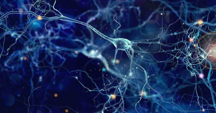 Scientists develop neural system for brain-machine interface