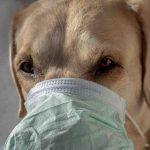 Coronavirus Canada Updates: Niagara-area dog has tested positive for COVID-19