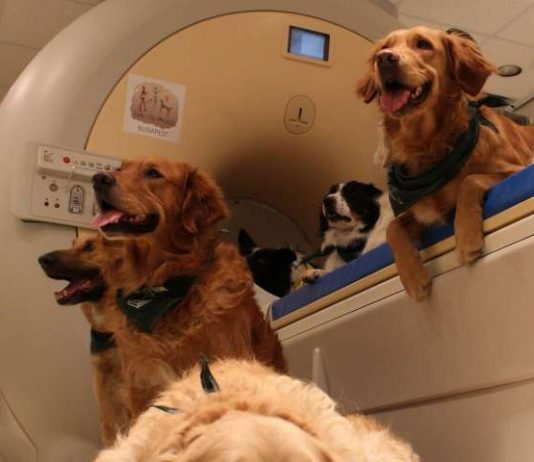 Dog and human brains process faces differently, Study
