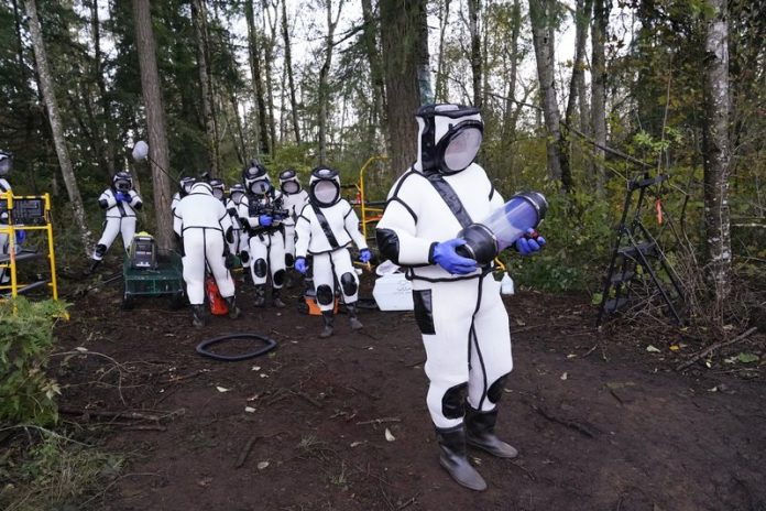Researchers remove 98 'murder hornets' in Washington state
