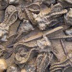 Study Provides Comprehensive Reconstruction of End-Permian Mass Extinction