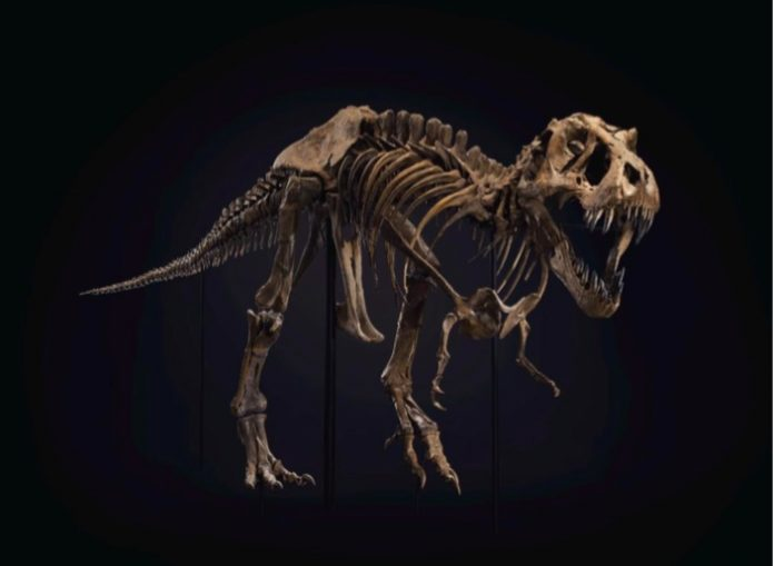 T. Rex Skeleton Sells For $31.8 Million At Christie's Auction, Report