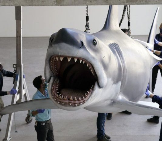 Bruce, the last shark from the film Jaws, docks at the Academy Museum (Video)