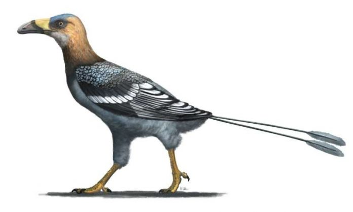Study: Fossil reveals 'buck-toothed toucan' that lived with dinosaurs