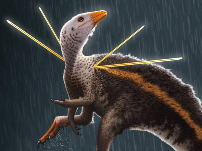 Fancy chicken-sized dinosaur sported a furry mane and shoulder ribbons (Study)