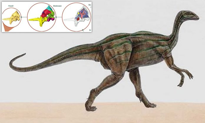 Study reveals unexpected insights into early dinosaur's brain, eating habits and agility