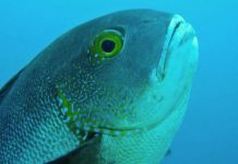 World's oldest tropical reef fish found in Western Australia waters (Study)